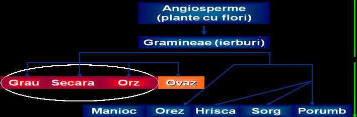 dermatita seboreica sugar